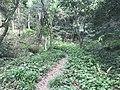 Kasuya Research Forest of Kyushu University 17.jpg