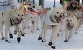 Kelly Maixner dog team.jpg