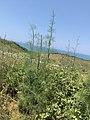 Kepi i Rodonit, Gjiri i Lalezit - Durres. 25.jpg