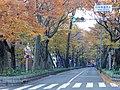 Keyaki Namiki N Cross autumn.jpg