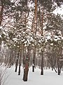 Khimselyshche, Cherkasy, Cherkas'ka oblast, Ukraine - panoramio (308).jpg