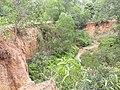 Khoai at Shantiniketan, Birbhum.jpg