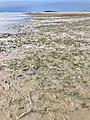 King Island joined to the Wellington Point by a sand and muddy causeway at low tide 02.jpg