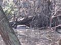 Klánovický les na východ od Klánovic 2926.jpg