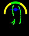 Kleinhirn spinocerebellum.png