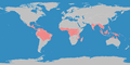 Klimagürtel-der-erde-tropen.png