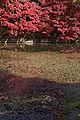 Kobe municipal forest botanical garden25s3200.jpg