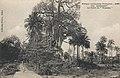 Konakry-La Forêt de Toumba.jpg