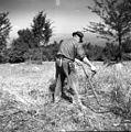Kosci z Oštrca na Košenicah v Gorjancih 1956 (11).jpg