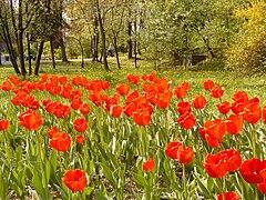 Krakow-Park Bednarskiego 2.jpg