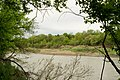 Kuban river near stanitsa Ubezhenskaya - panoramio (1).jpg