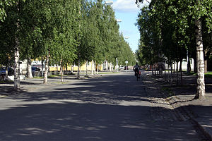 Umeå - A characteristic birch tree-lined avenue.
