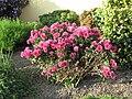 Květiny na Olšanské.jpg