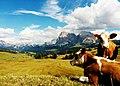 L'Alpe di Siusi - panoramio.jpg
