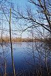 LSG H 00070 Calenberger Leinetal - Teich an der Calenburg (3).jpg