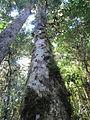 La Amistad Panama Biosphere Reserve - Parque Nacional Volcan Baru (a core zone) 27.JPG