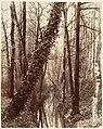 La Bièvre, Boulevard d'Italie 13ème disparue en 1891; aujourd'hui rue Edmond Gondinet MET DP124595.jpg