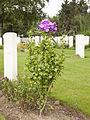 La Brique Military Cemetery n°2. 3.JPG