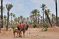 La Palmeraie de Marrakech 697.JPG