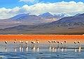 Laguna Colorada, Sud Lípez, Bolivia - panoramio.jpg
