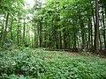 Landschaftsschutzgebiet Horstmanns Holz Melle -Im Wald- Datei 2.jpg