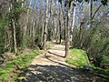 Lexington County, SC, USA - panoramio - Jose M Vidal.jpg