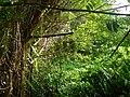 Limbang, Sarawak, Malaysia - panoramio (3).jpg