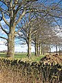 Line of trees in winter - geograph.org.uk - 357726.jpg