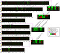 Lineage-Specific-Gene-Duplication-and-Loss-in-Human-and-Great-Ape-Evolution-pbio.0020207.g005.jpg