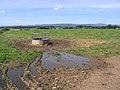 Livestock field - geograph.org.uk - 533141.jpg