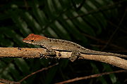 Lizard on twig.JPG