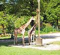 Ljubljana zoo 3.jpg