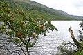 Loch an Dubh-Lochain - geograph.org.uk - 234551.jpg