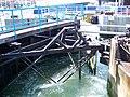 Lock gates, Hythe Marina - geograph.org.uk - 868958.jpg
