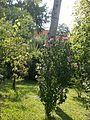 Lorto-botanico-di-padova-2016 27757185784 o 22.jpg