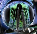 MAGLEV wasp face 2020-08-06-13.39.41 ZS PMax UDR (50212183592).jpg