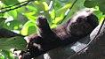 Macaco no Jardim Botânico.jpg