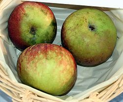 cox orange pippin appel