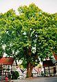 Marktlinde Tecklenburg 01.jpg