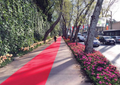 Match day Red Carpet.png