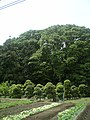 Matoba, Kawagoe, Saitama Prefecture 350-1101, Japan - panoramio - t.suzuki (3).jpg