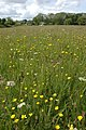 Meadow of wild flowers, Queest Moor - geograph.org.uk - 442608.jpg