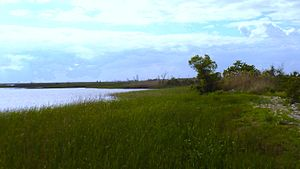 Meaher State Park - Wetlands at Meaher State Park