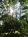 Meisel Ave Park Union County sun through trees.JPG
