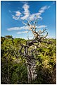 Menorca Nature (43953742).jpeg
