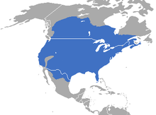 Map showing distribution of striped skunk in North America