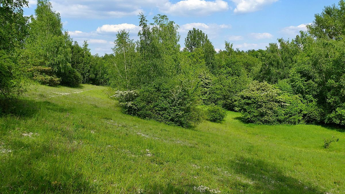Mergelhalde Naturschutzgebiet Wikipedia