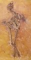 Messelornis cristata 1.jpg