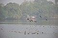 Migratory Birds - Santragachi Jheel - Howrah 2017-12-25 5634.JPG