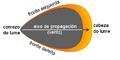 Modelo propagacion lume forestal.png